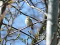 En lille sangfugl
