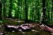Hammersholm skoven