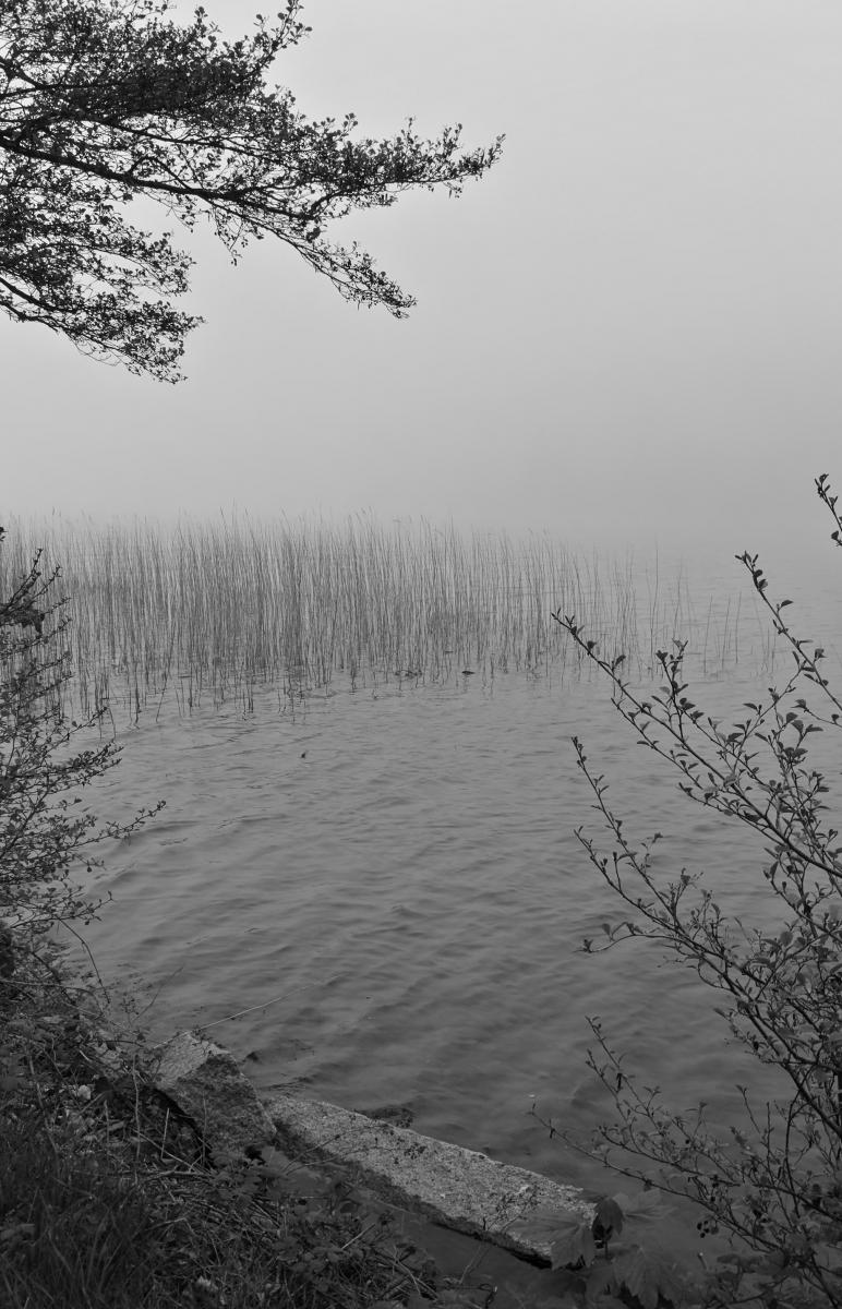 Siv i tåge Hammersøen 2