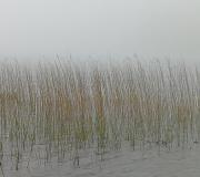 Siv i tåge Hammersøen 1