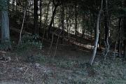 Fra Hammersholm skoven